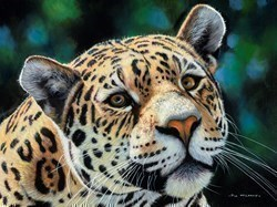 Jaguar II by Pip McGarry -  sized 24x18 inches. Available from Whitewall Galleries